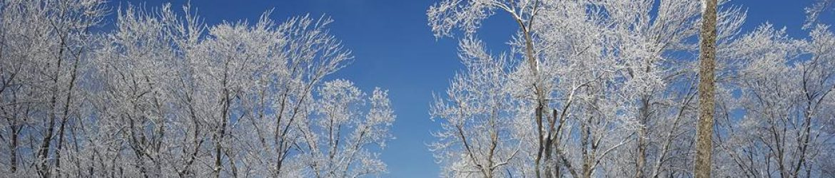 cropped-frostytrees-1.jpg